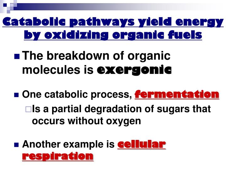 Catabolic pathways yield energy by oxidizing organic fuels
