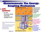 chemiosmosis the energy coupling mechanism