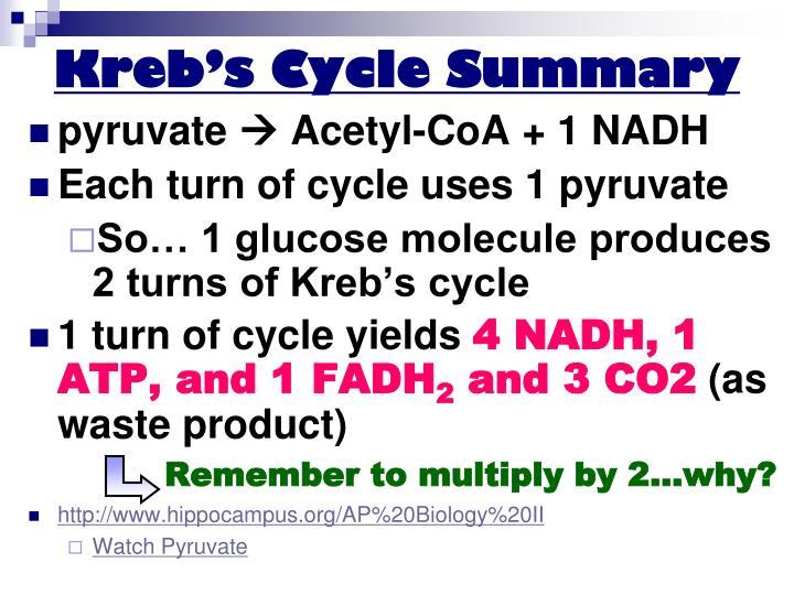 Kreb's Cycle Summary