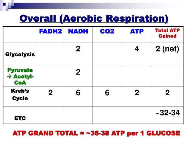 Overall (Aerobic Respiration)