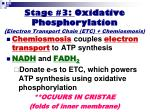 stage 3 oxidative phosphorylation electron transport chain etc chemiosmosis