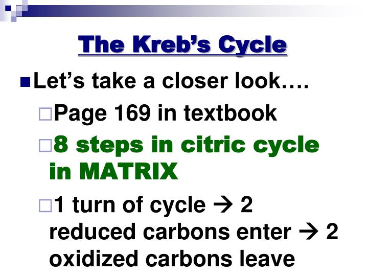 The Kreb's Cycle