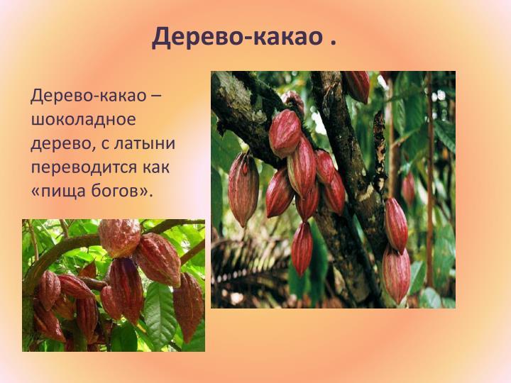 Дерево-какао .