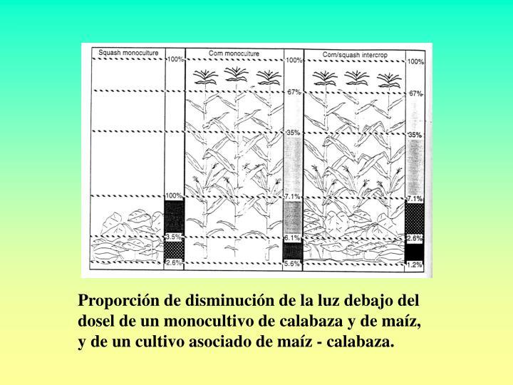 Proporción de disminución de la luz debajo del dosel de un monocultivo de calabaza y de maíz, y de un cultivo asociado de maíz