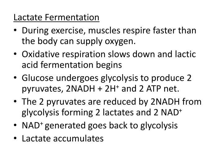 Lactate Fermentation
