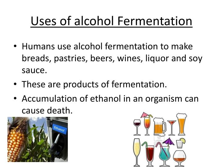 Uses of alcohol Fermentation