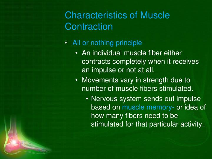 Characteristics of Muscle Contraction