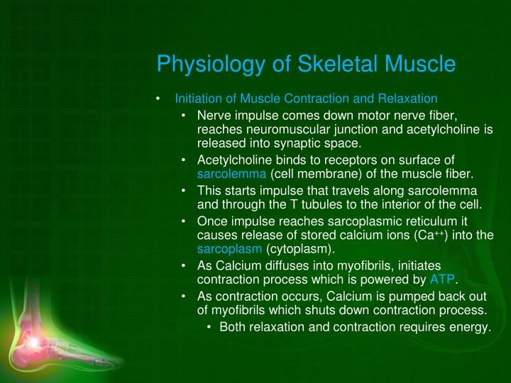 Physiology of Skeletal Muscle
