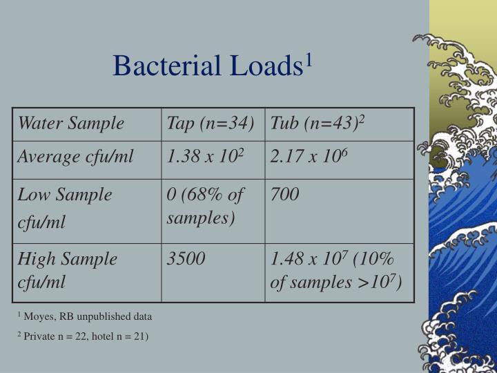 Bacterial Loads