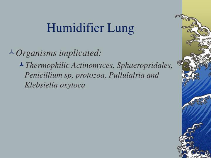 Humidifier Lung