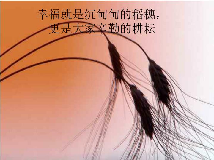 幸福就是沉甸甸的稻穗,