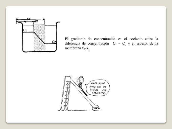 El gradiente de concentración es el cociente entre la diferencia de concentración  C