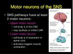 motor neurons of the sns