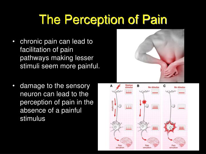 The Perception of Pain