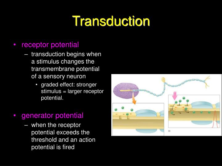 Transduction