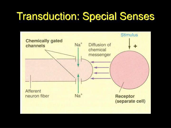 Transduction: Special Senses