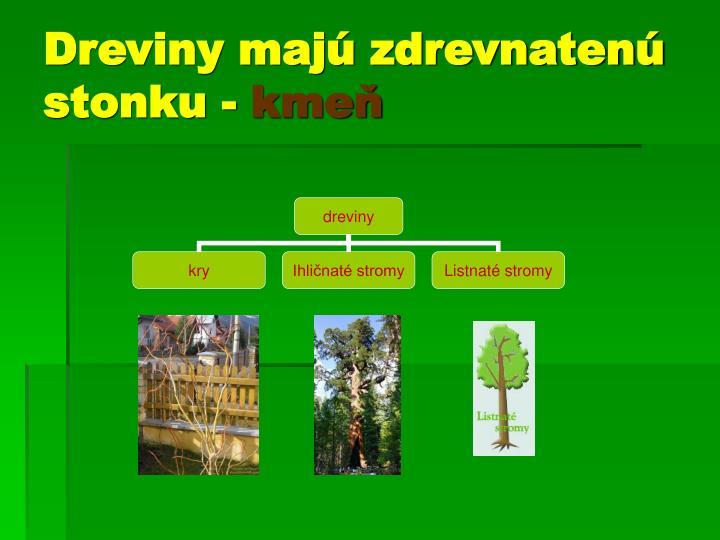 Dreviny majú zdrevnatenú     stonku -