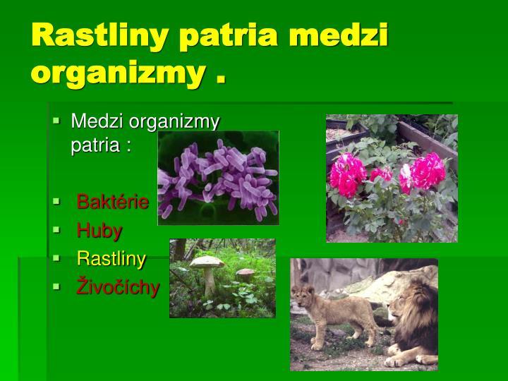 Rastliny patria medzi organizmy .