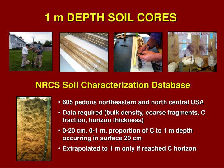 1 m DEPTH SOIL CORES