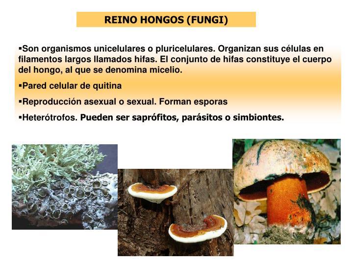 REINO HONGOS (FUNGI)