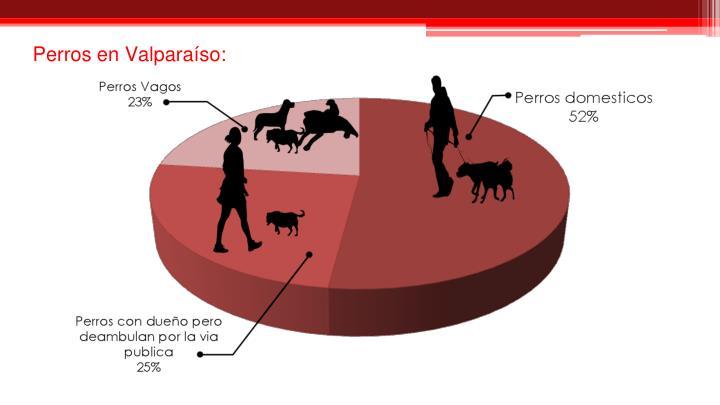 Perros en Valparaíso: