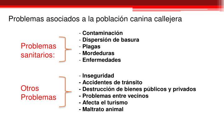 Problemas asociados a la población canina callejera