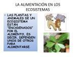 la alimentaci n en los ecosistemas