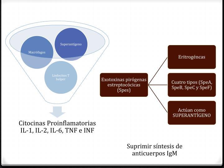 Suprimir síntesis de anticuerpos