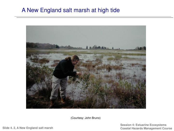 A New England salt marsh at high tide