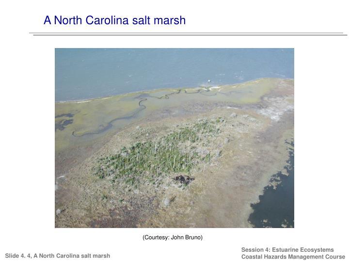 A North Carolina salt marsh