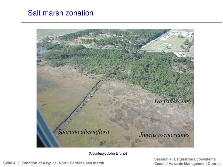Salt marsh zonation
