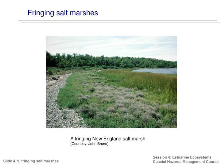 Fringing salt marshes