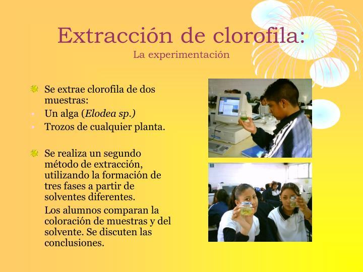 Extracción de clorofila: