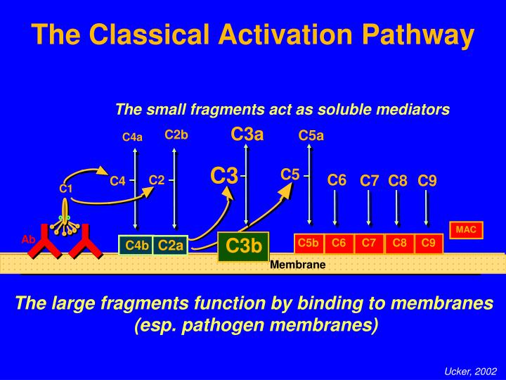Classical Activation Pathway