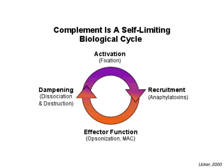 Complement is a self-limiting cycle