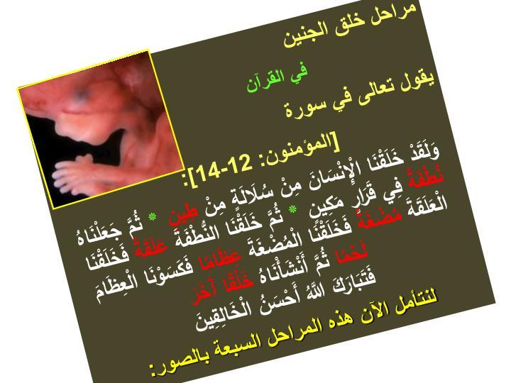 مراحل خلق الجنين