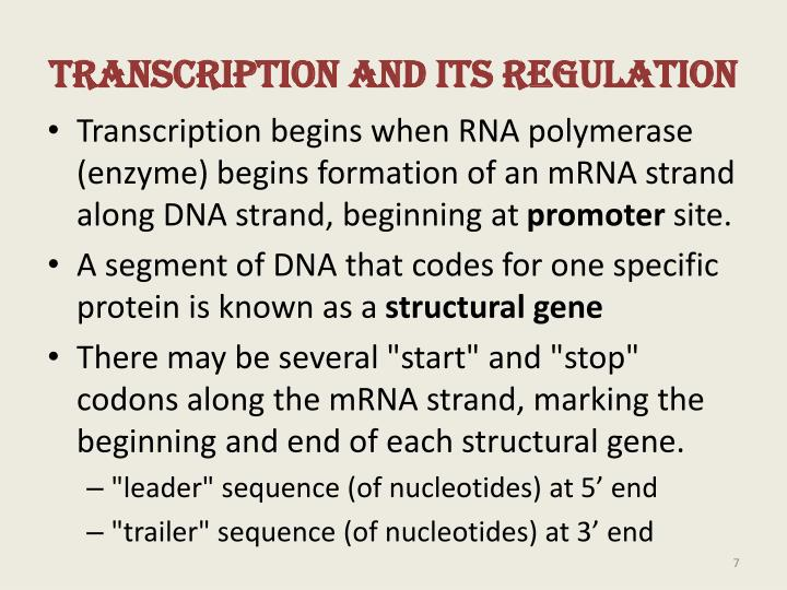 Transcription and Its Regulation