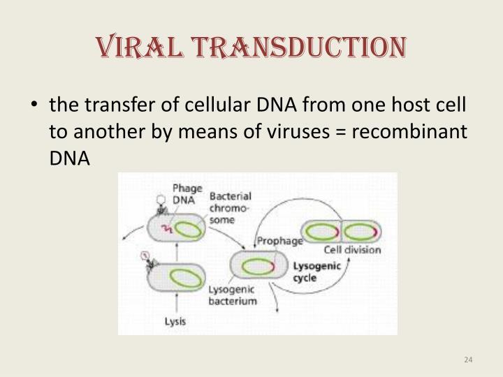 Viral Transduction