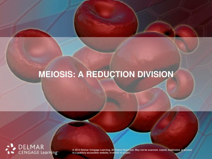 Meiosis: A Reduction Division