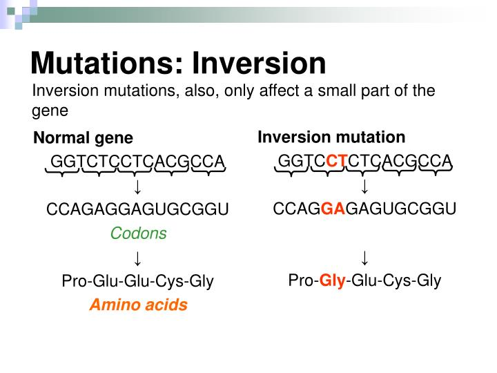 Mutations: Inversion