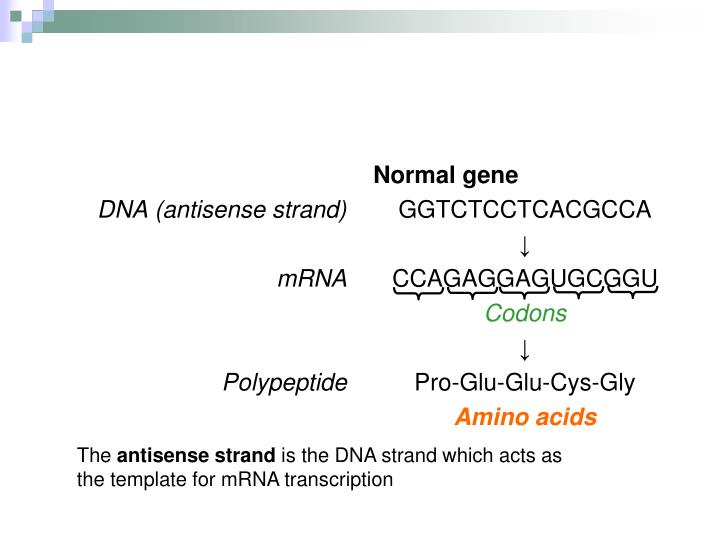 DNA (antisense strand)