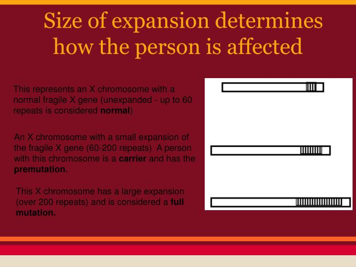 Size of expansion determines how the person is affected
