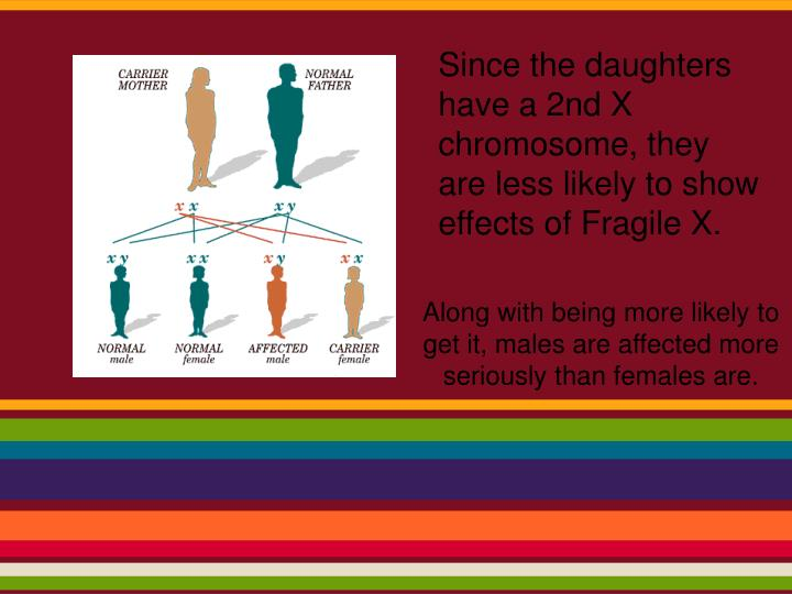 Since the daughters have a 2nd X chromosome, they are less likely to show effects of Fragile X.