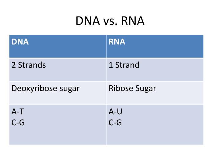 DNA vs. RNA