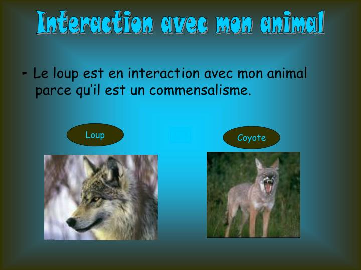 Interaction avec mon animal