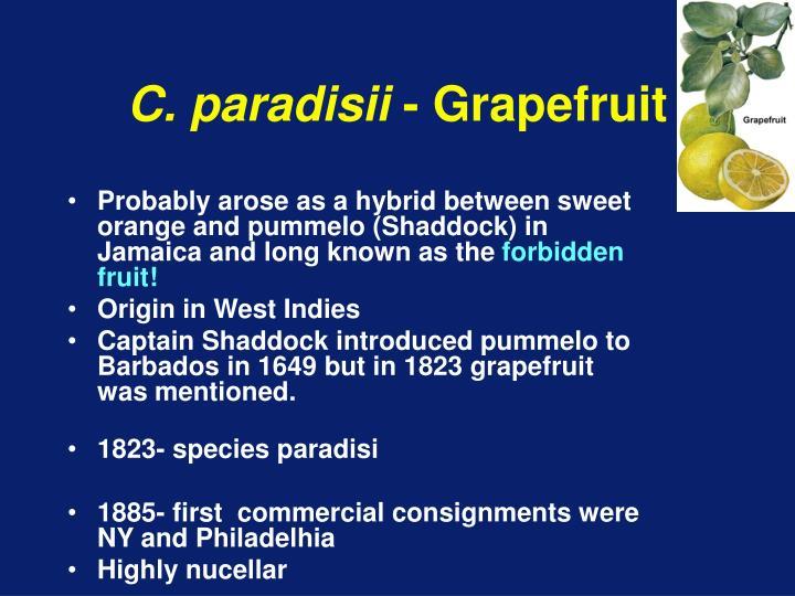 C. paradisii