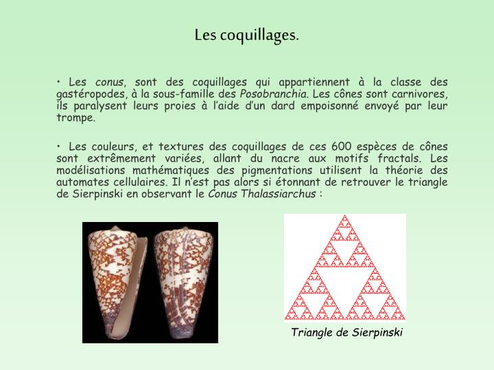 Les coquillages.