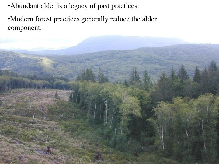 Abundant alder is a legacy of past practices.