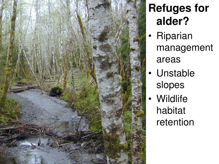 Refuges for alder?