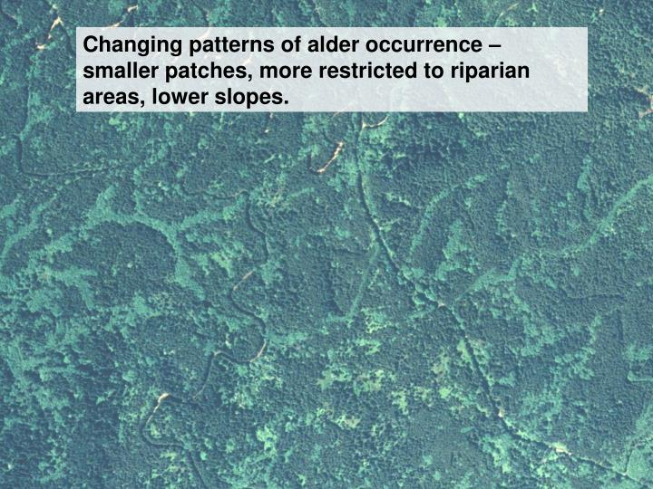Changing patterns of alder occurrence – smaller patches, more restricted to riparian areas, lower slopes.